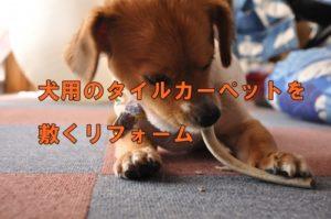 犬用のタイルカーペットを敷くリフォーム!吸着タイプなら自分でできる