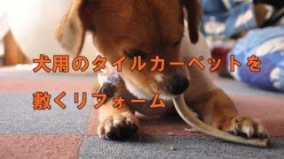 犬用のタイルカーペットを敷くリフォーム