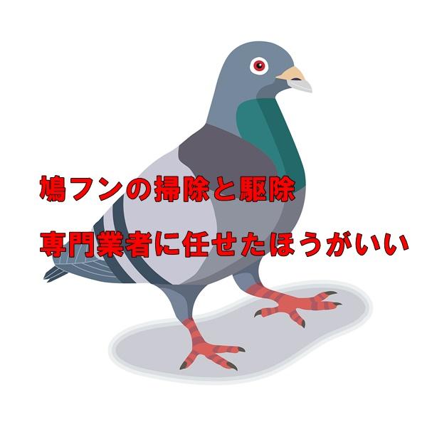 鳩フンの掃除と駆除
